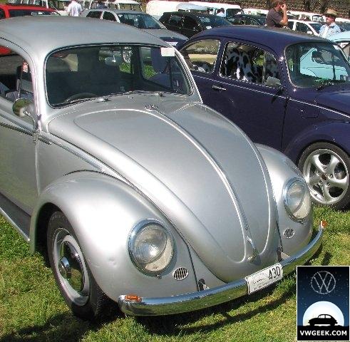beetles2