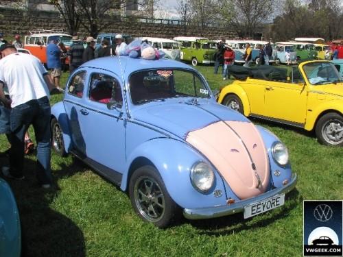 beetles5