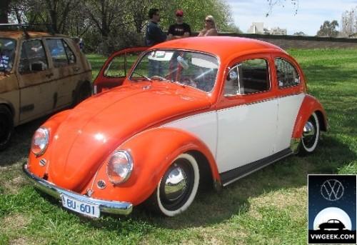 beetles6