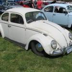 beetles7