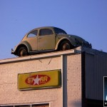 roof-beetle