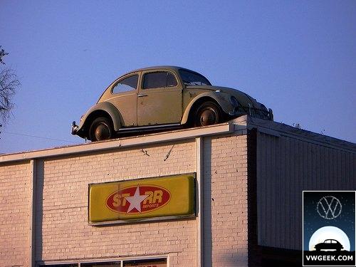 roof-beetle