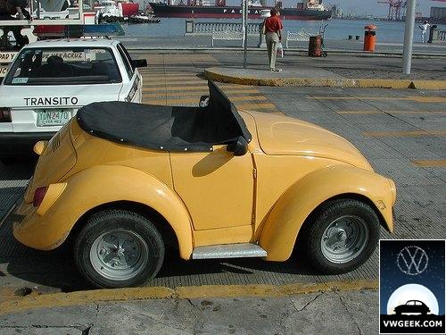 short-beetle