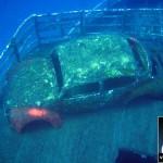 underwater-beetle