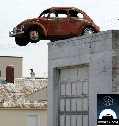 wall-beetle